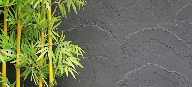 bamboo and abstract gray concrete wall